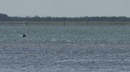 Wild Dolphins Near Island 03 Stock Footage