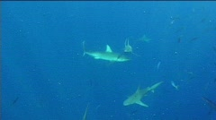 sharks everywhere  - stock footage