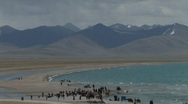 Stock Video Footage of Horse Camp by the lake Namtso in Tibet