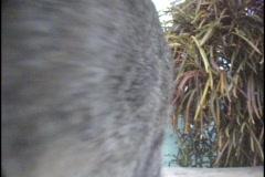 Tabby Cat 01 Stock Footage