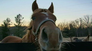 Stock Video Footage of Nosy Horse