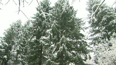 Forest Trees Covered in Snow After a Storm in Washington State Stock Footage