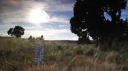 Stock Video Footage of Blue flower in field