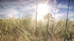 Grassy Field Stock Footage