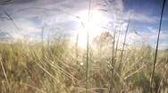 Stock Video Footage of Grassy Field