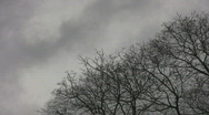 Stock Video Footage of Spooky trees and sky. 1 of 2.