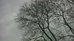 Spooky puita ja taivas. Arkistovideo
