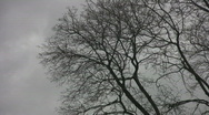 Spooky trees & sky. 2 of 2.  Stock Footage