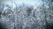 Ice storm on trees Stock Footage