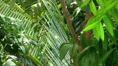 Tree leafs Stock Footage
