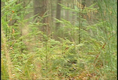Military, camouflaged soldiers in the forest, #2 Stock Footage