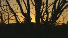 Bright sunset behind creepy tree Stock Footage