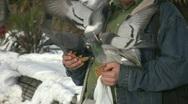 Man feeds pigeons. Stock Footage