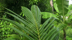 Palm tree leaf moving in the wind - stock footage