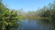 Stock Video Footage of Lake in the Glades
