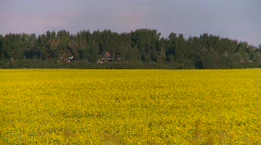 Agriculture, canola field, zoom back, #2 Stock Footage