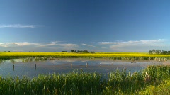 Agriculture, canola fields and pond, #9 Stock Footage