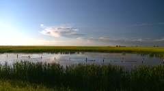 Agriculture, canola fields and pond, #5 Stock Footage