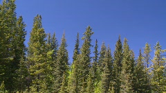 Forest and really blue sky Stock Footage