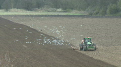 Seabirds behind seed drill - front view 2 Stock Footage