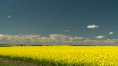 agriculture, canola fields, strong contrast, #5 wide pan - stock footage