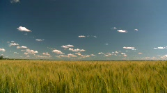 Agriculture, wheat field, beautiful sky Stock Footage