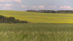 Agriculture, canola and wheat fields, #3 long lens Stock Footage