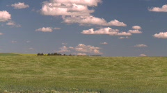 agriculture, wind and wavy barley, #1 - stock footage