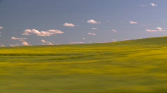 Agriculture, canola and wheat fields, #1 Stock Footage