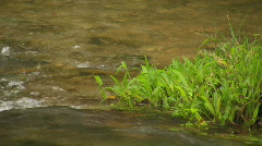 Grass growing in a clear river in the Philippines Stock Footage
