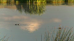 Duck pond, #2 Stock Footage