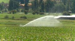 agriculture, irrigation sprinkler, corn field, long shot - stock footage