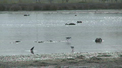 Wetland reserve  Stock Footage
