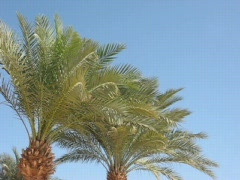 Branches of palm trees - stock footage