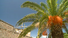 Palm tree and fort wall Stock Footage