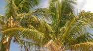 Palm trees, #5 Stock Footage