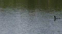 duckfloatsby - stock footage