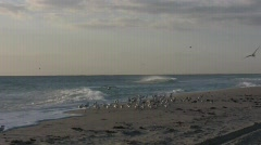 Birds and beach Stock Footage