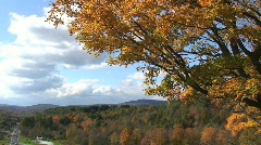 Vermont Autumn Leaves Blowing in the Wind Stock Footage