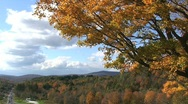 Stock Video Footage of Vermont Autumn Leaves Blowing in the Wind