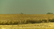 Agriculture, combine harvesting wheat, #4 Stock Footage