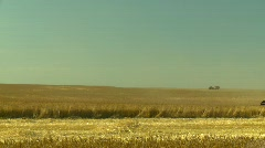 Agriculture, wheat harvest with combine, through frame, medium Stock Footage