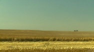 Stock Video Footage of agriculture, wheat harvest with combine, through frame, medium