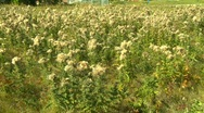 Thistle, weeds, #1 Stock Footage