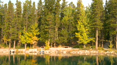 Lakeshore, trees autumn Stock Footage