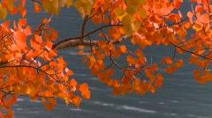 Vibrant autumn colors, #3 Stock Footage