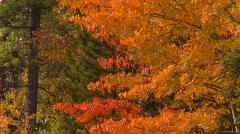 Vibrant autumn colors, #10 Stock Footage