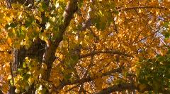 Vibrant autumn colors, #7 Stock Footage