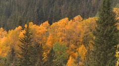 Vibrant autumn colors, #11 Stock Footage