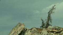 Top of mountain, windswept lonely tree Stock Footage